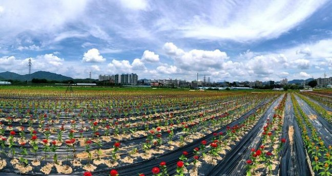 [포토]의림지뜰 색동꽃정원 조성